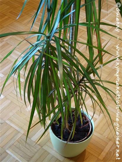 Giftige und ungiftige zimmerpflanzen f r v gel sittiche - Zimmerpflanzen giftig ...