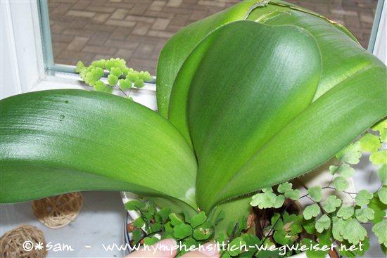 giftige und ungiftige zimmerpflanzen f r v gel sittiche und papageien. Black Bedroom Furniture Sets. Home Design Ideas