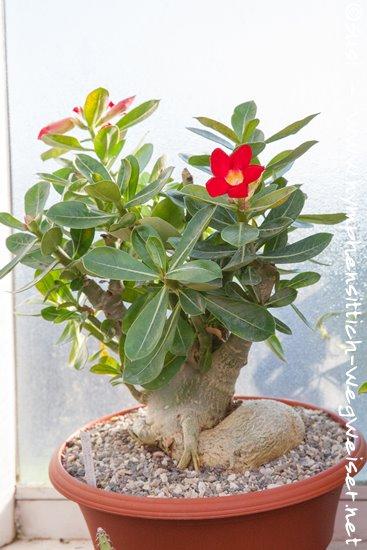Giftige und ungiftige zimmerpflanzen f r v gel sittiche und papageien - Zimmerpflanzen giftig ...
