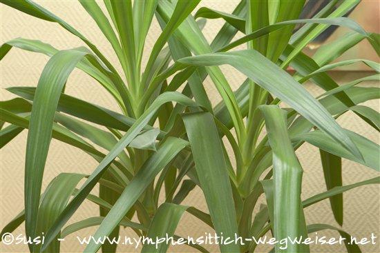 yucca palme wohnzimmer ~ artownit for ., Wohnzimmer ideen