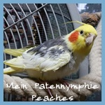 Patenavatar Peaches